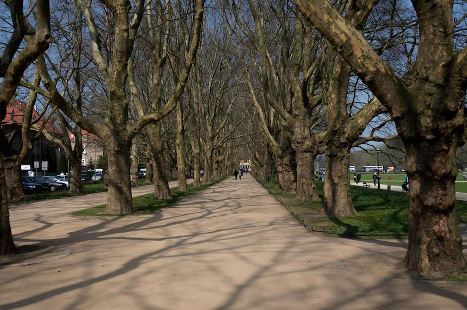 Świetne miejsce do spacerów i dla biegaczy.