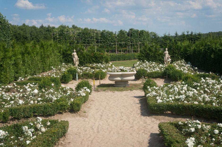 Ogród białych róż. Taka nasza różanka w wersji premium.