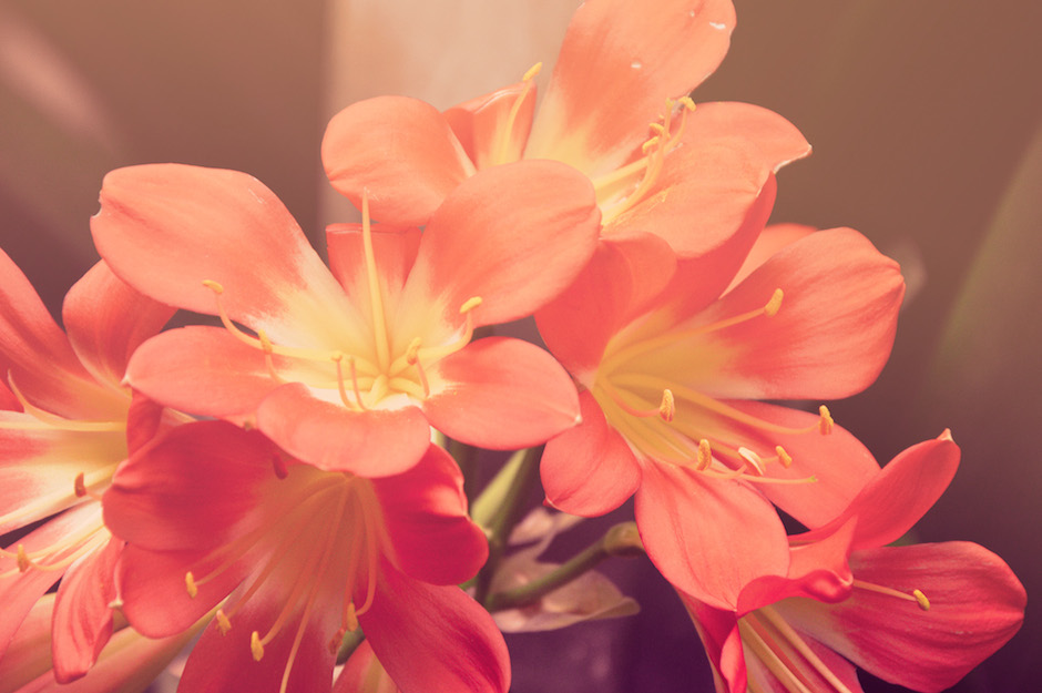 kwiaciarnia-szczecin-galaxy