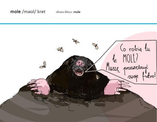 mole do W_T nowa książka