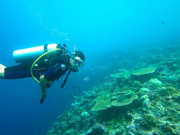 50% zniżki na podwodną wycieczkę z instruktorem w szkole nurkowania Delphinus
