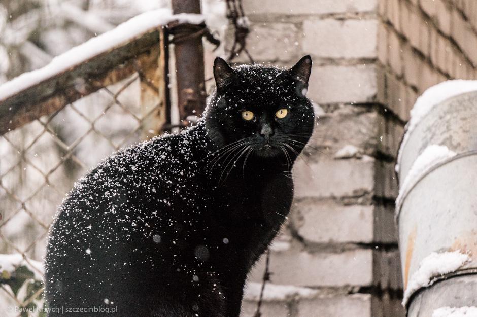Tysiące lat temu czczono koty jako bogów. One nigdy o tym nie zapomniały.